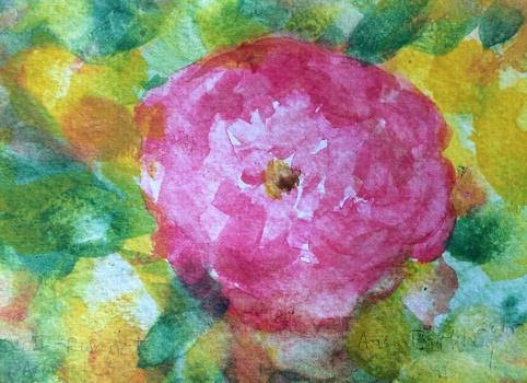 20160417081109-rose_ii_rosaret_arboretet