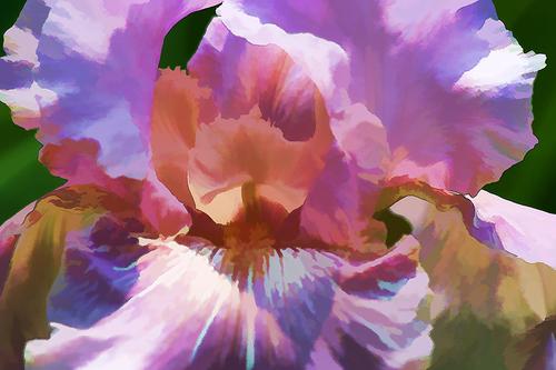 20160507190051-print-_hollygordon-iris-1617m1