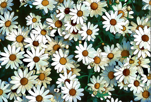 20160507190122-holly-gordon_daisies