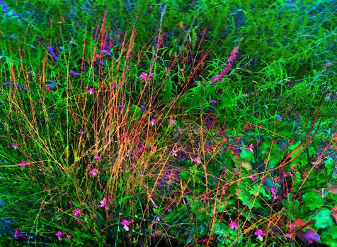 20160525083405-floral_hedges_7_100cmx136cm