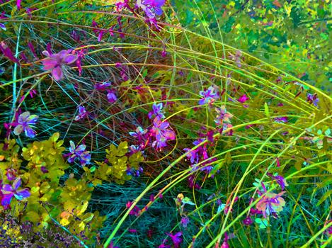 20160525120001-floral_hedges_3_100cm_x_134cm