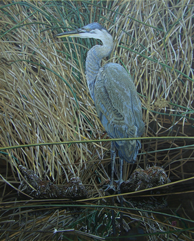 20160627001647-brown__eric_-_blue_heron_in_yellow_grass