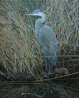 20160627001647-brown__eric_-_blue_heron_in_yellow_grass