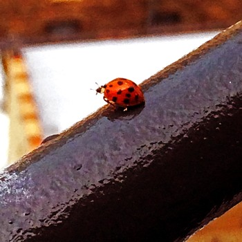 20160707172910-ladybug
