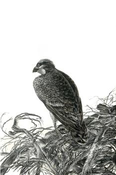 20160718193943-4_anderson_osprey