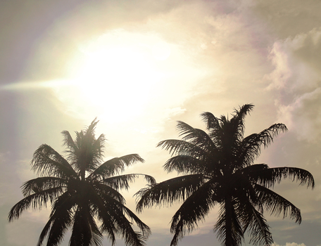 20160720215014-sunpalmtrees_2016