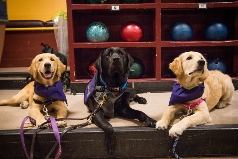Sparky's Service Dogs raise puppies on campus for a cause