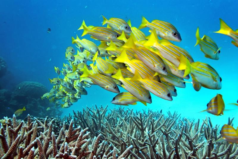 No, the Great Barrier Reef in Australia is not dead - but it is in trouble