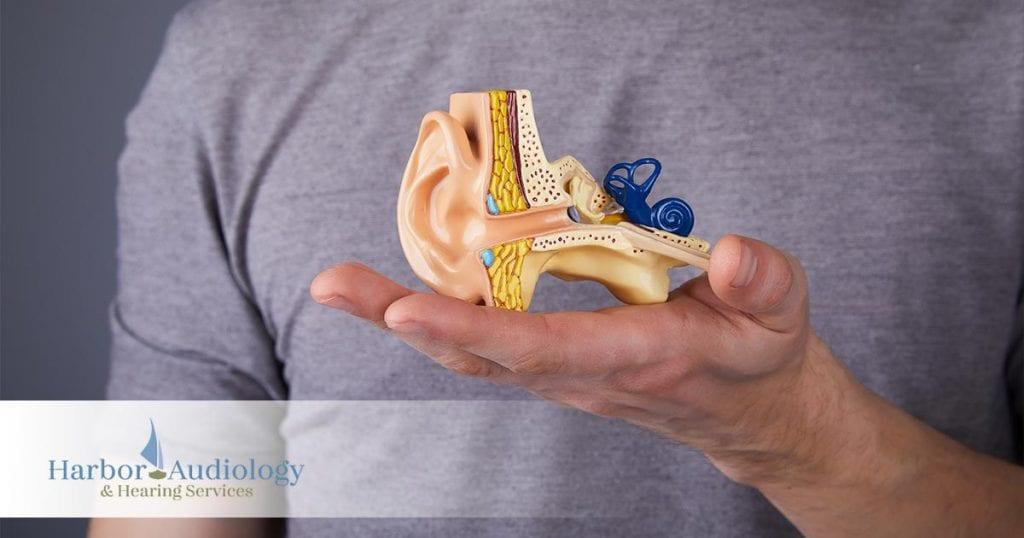 What is Autoimmune Inner Ear Disease What Causes It
