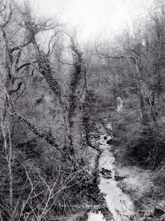 Fairy Glen, Chudleigh, Devon