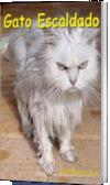 Gato Escaldado