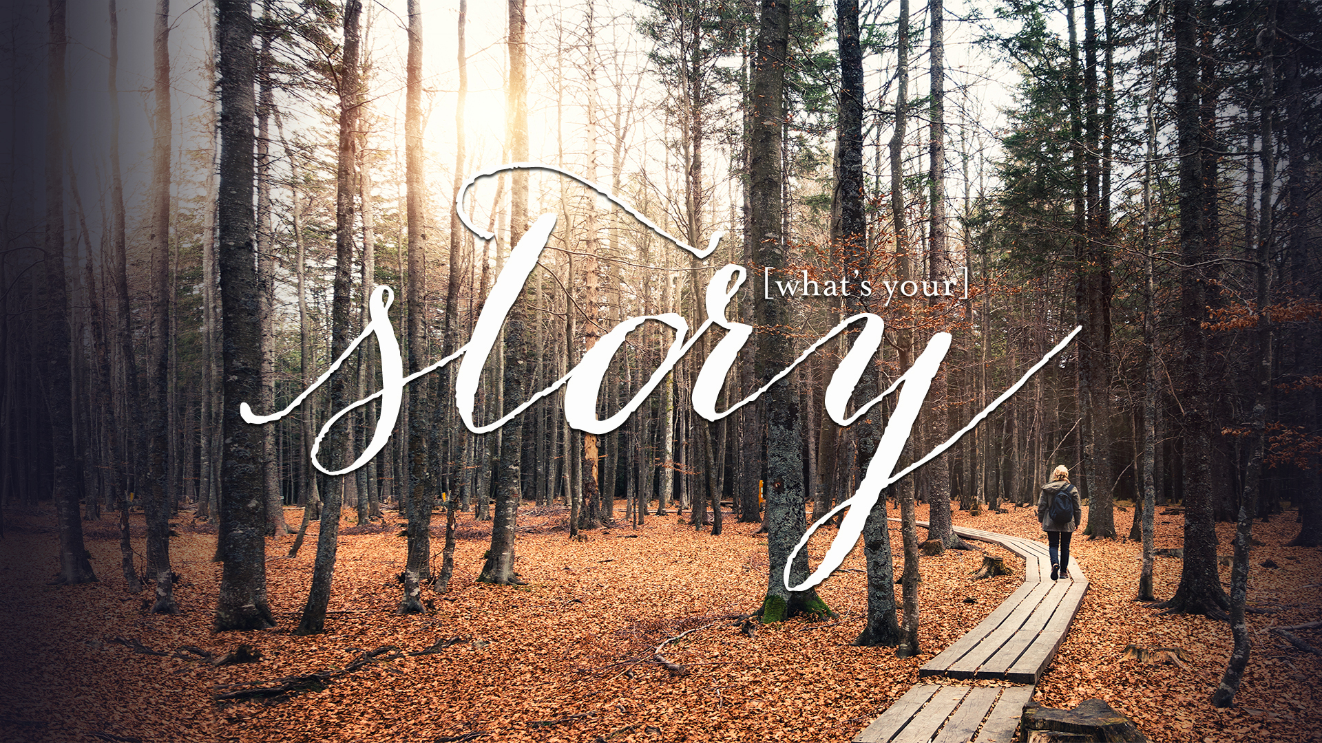 """Story"" fall bible study for women"