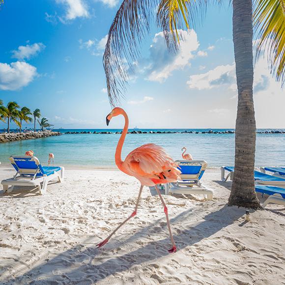 Aruba del 28 diciembre al 02 de enero del 2020