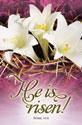 Standard Easter Bulletin: He is Risen