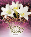 Premium Easter Bulletin: He Is Risen