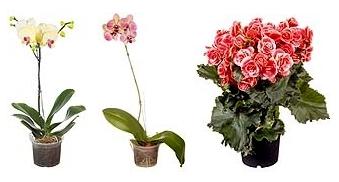 Flores e Plantas com 30% de desconto!