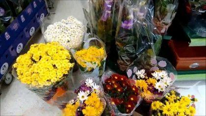 Flores e Plantas com 20% de desconto!