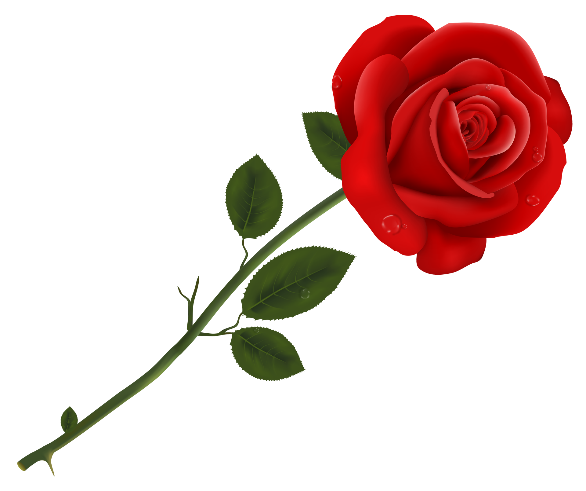 The Symbol of the Rose