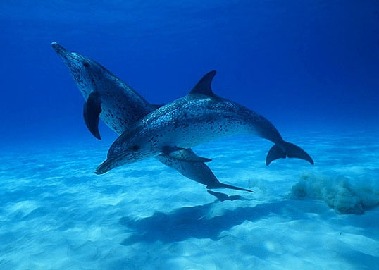 Dolphins love mirrors. They have a theory of mind.