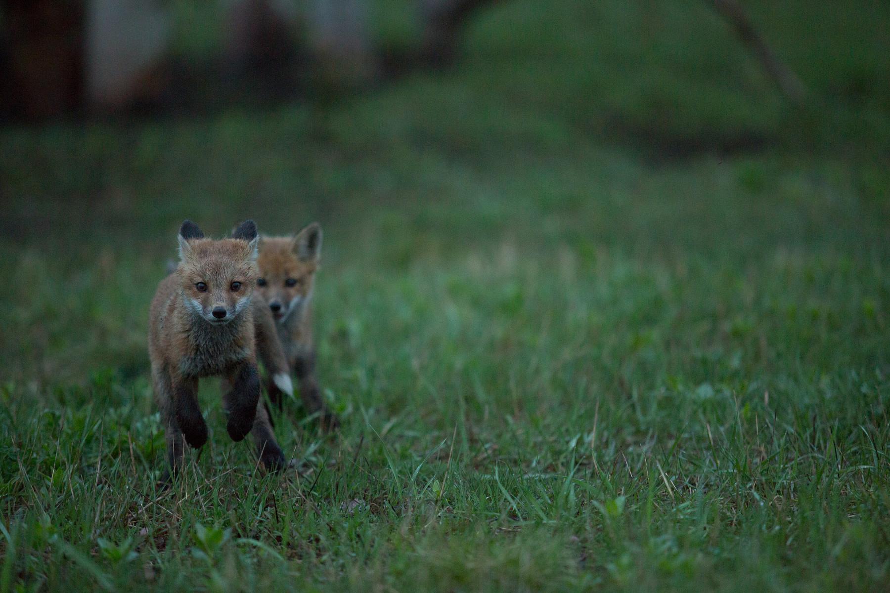 Foxy Family // Barrie // Ontario