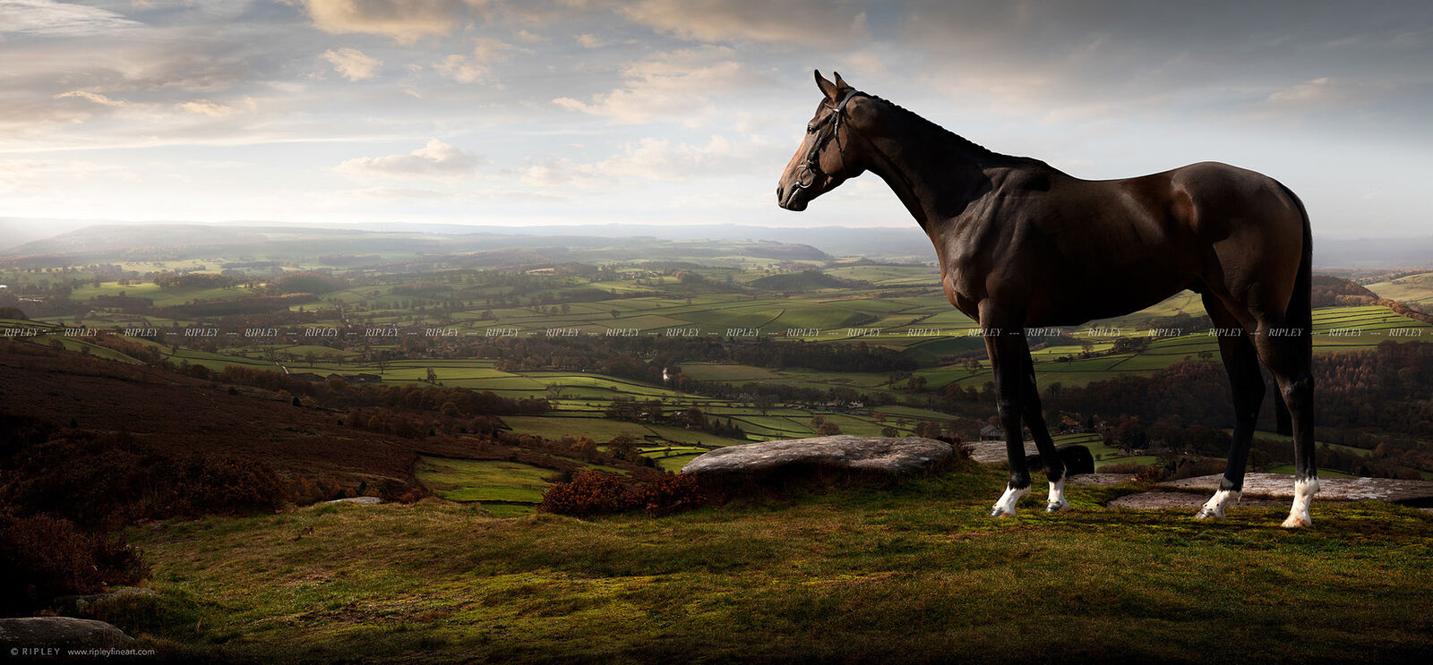 Racehorse in an English Landscape