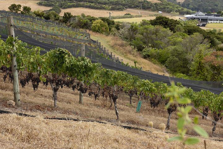 Winemakers vineyard