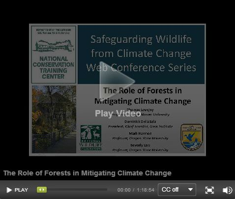 Carbon Canopy Forests and Climate