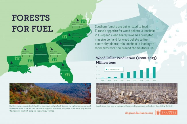 DA_Southern Forests Infographic FIN