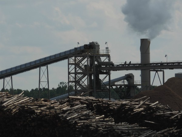 Enviva facility in Southampton, VA: Massive piles of whole hardwood trees burned for electricity in Europe - funded by UK subsidies.