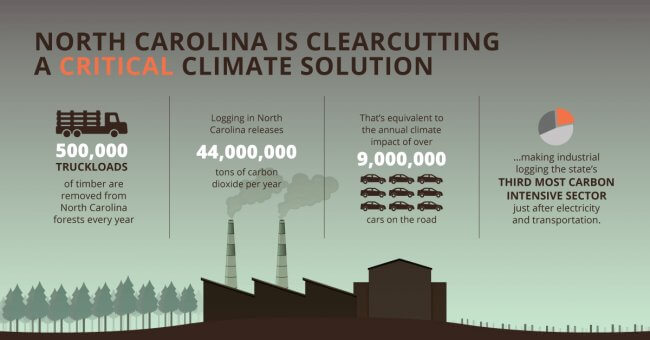 Infographic that shows the climate impact of industrial logging in NC. Reads: North Carolina is Clearcutting a Critical Climate Solution. 500,000 truckloads of timber are removed from North Carolina forests every year. Logging in North Carolian releases 44 million tons of carbon dioxide per year. That's equivalent to the annual climate impact of over 9 million cars on the road, making industrial logging the state's third most carbon intensive sector, just after electricity and transportation.