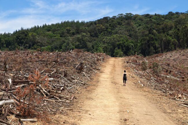 Photo of Clearcut