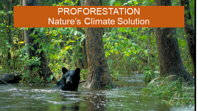 Proforestation: Nature's Climate Solution