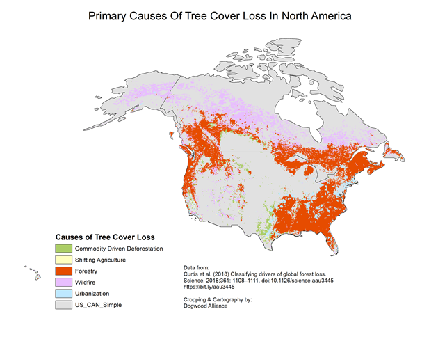 Primary causes of tree cover loss in North America