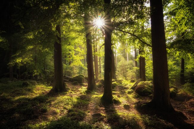 forest-2541928_Image by Sven Lachmann from Pixabay