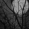 MidnightBlood