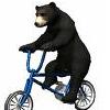 ali_the_bear
