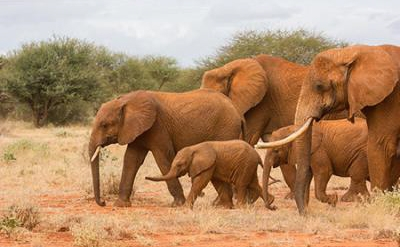 elephants_by_peter_steward