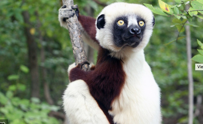 MorphoSource.org allows users to view and print 3D models of lemurs and other primates.