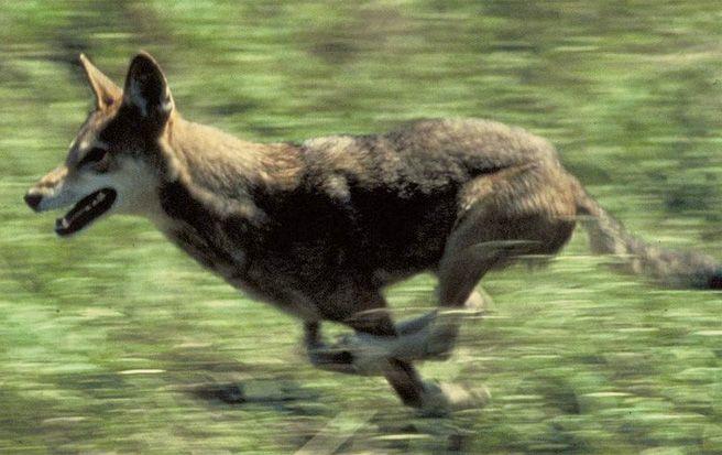 d6L34gzP-redwolves_special