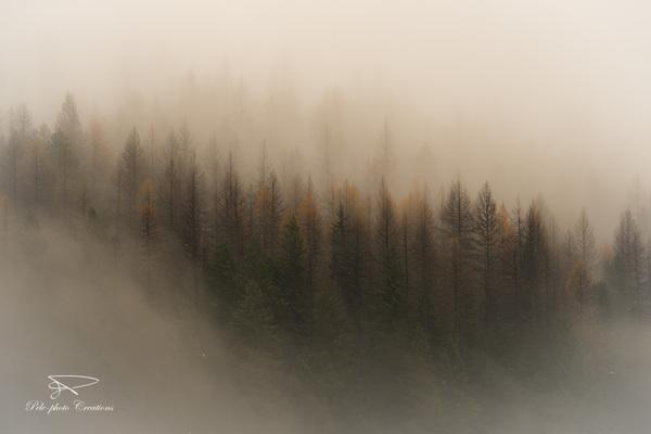 An Emerging Forest
