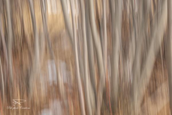 Boscage Struggle