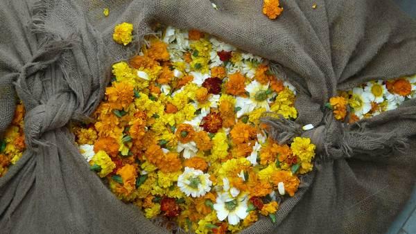 Opferblumen in Indien