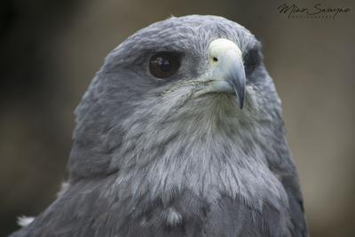 Vista de Aguila