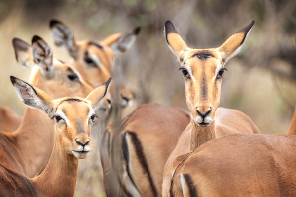 Zuid Afrika, Kruger National Park