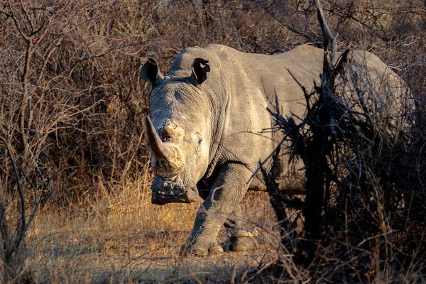 Botswana, Serowe