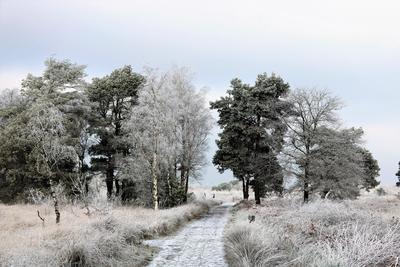 Sneeuw en rijp