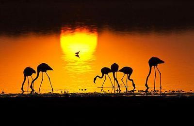 Lesser Flamingos  Serengeti NP, Tanzania