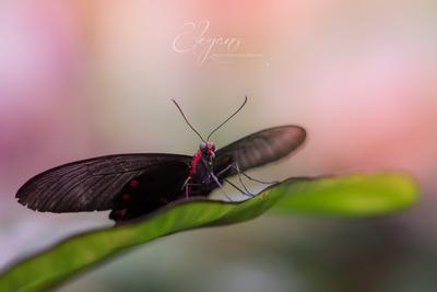 Butterfly2.jpg