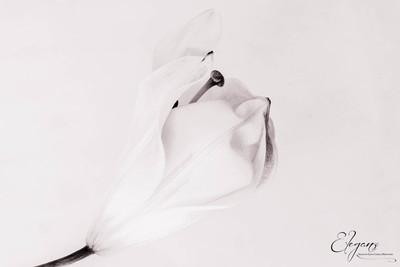 High Key - Lily.jpg