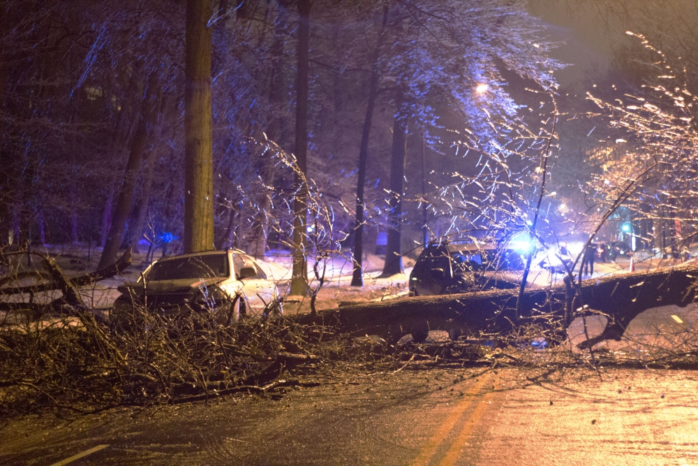 Fallen tree blocks Massachusetts Avenue